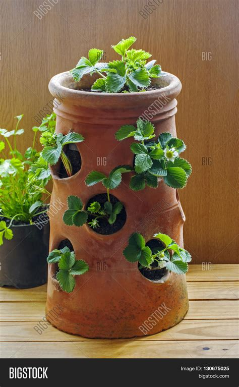 terracotta strawberry planter terracotta strawberry planter with plants and