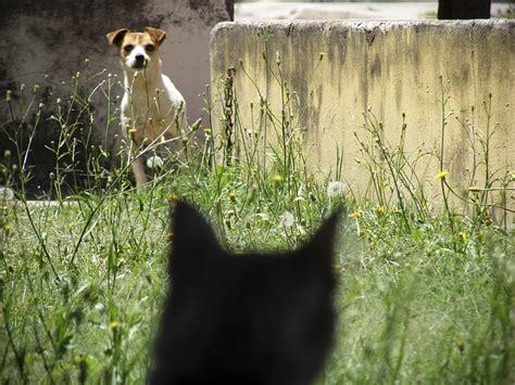 why do dogs cats dogalize il pet social network per il tuo e gatto