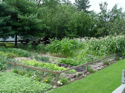 big vegetable garden grow vegetables in the shade it s possible garden