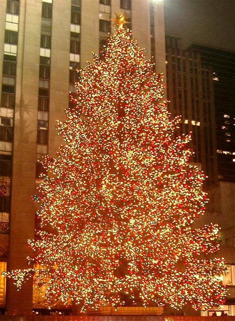 the famous rockefeller center christmas tree in new york