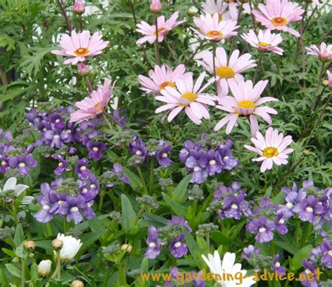 Annual Garden Flowers Annual Plants How To Get The Best Out Of Your Annual Flower Garden
