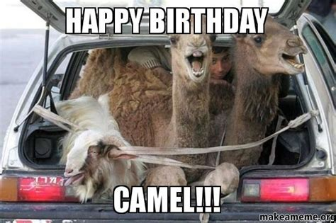 happy birthday camel make a meme