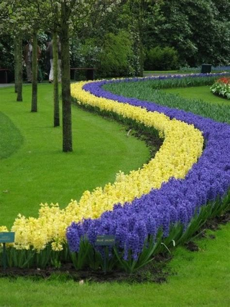 Amazing Flower Garden Amazing Flower Line On The Garden Garden