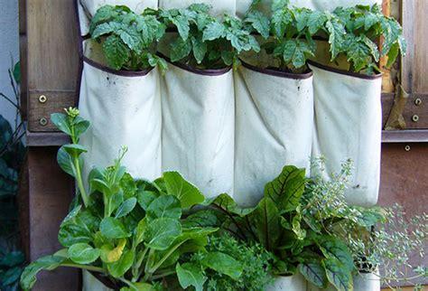piante per il terrazzo quali piante scegliere per il terrazzo news gabetti