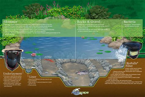 koi pond diagram ecosystem ponds and water features in des moines just