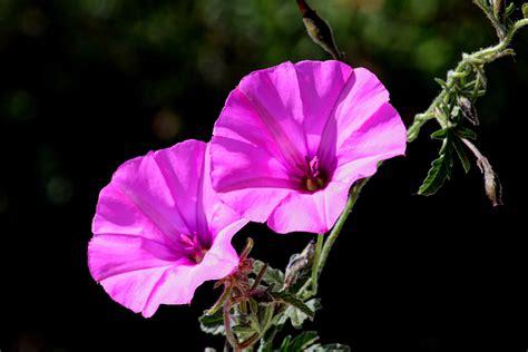ci vuole il fiore ci vuole un fiore juzaphoto