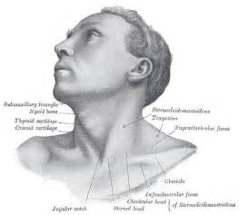 Define Cupola Supraclavicular Lymph Nodes Wikidoc
