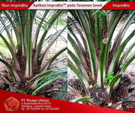 Harga Sabut Kelapa Sawit jual pupuk improbio tanaman kelapa sawit harga murah
