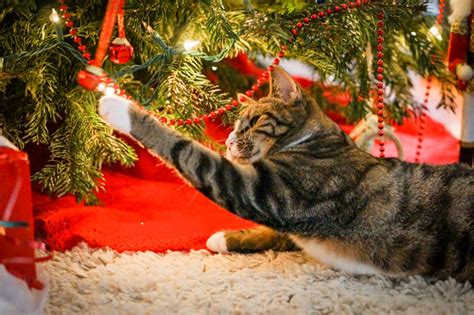 cat and tree creative ways to cat proof your tree cattime