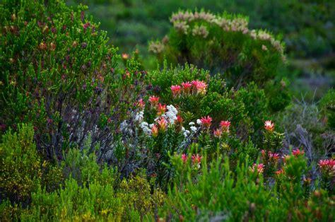 conservation natural vegetation essay