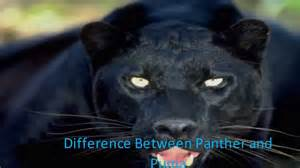 What Is The Difference Between Jaguar And Panther Difference Between Panther And