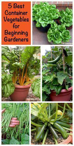 beginning vegetable gardening 5 best container vegetables for beginning gardeners