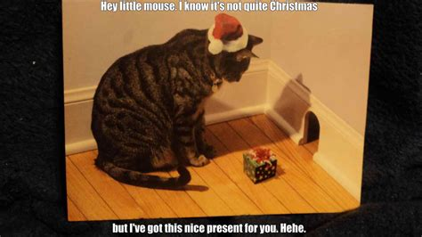 Funny Christmas Cat Memes - grumpy christmas cat humor dog and angry talk funnies