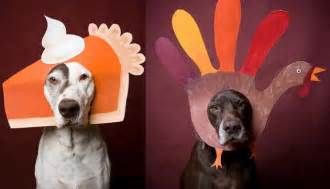 dogs thanksgiving thanksgiving pet poll