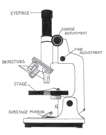 compound light microscope uses the compound microscope