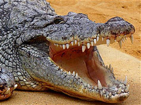 zoologischer garten berlin krokodile zoo k 246 ln tierpark in k 246 ln parkscout de