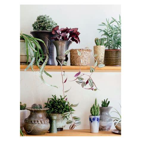 Livre Decoration by Livre Quot Jungle D 233 Corer Avec Les Plantes Quot