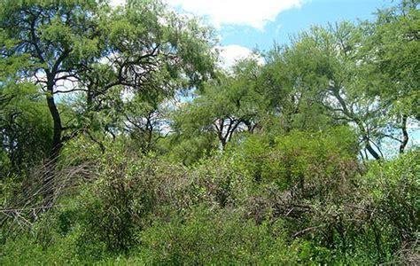 los bosques ibericos practicos producci 243 n jornada de restauraci 243 n de bosques y suelos en enrique urien chaco d 205 a por d 205 a