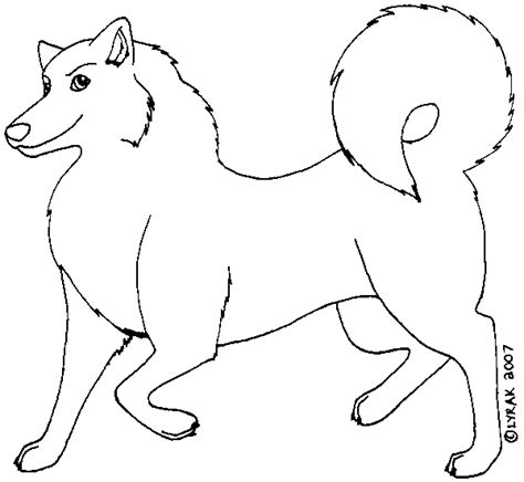 husky template husky template by lyrak on deviantart