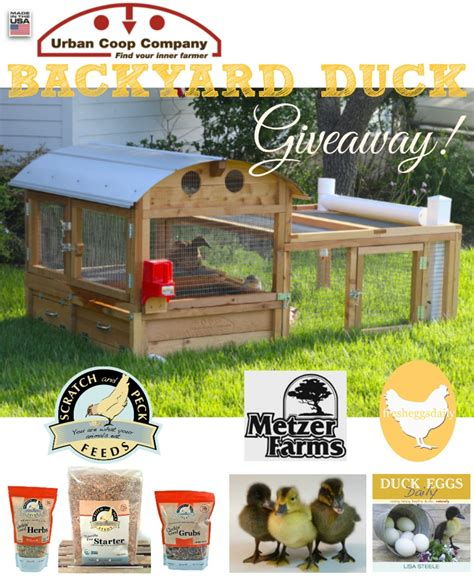Ducks Giveaways - enter the backyard duckapalooza giveaway