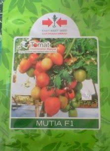 Benih Tomat Harga Per 1 Sachet tomat mutia f1 bibit unggul