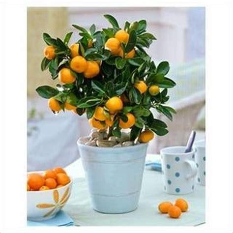 best way to water fruit trees best 25 orange trees ideas on orange grove