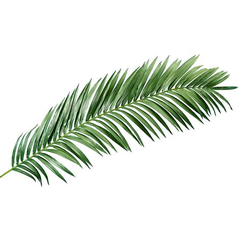 d 233 co palme de palmier g 233 ant d 233 co 240 cm d 233 coration chez