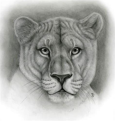 dibujos realistas lápiz 50 profesionales de fotos dibujos de animales realistas