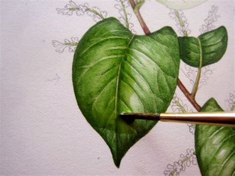 watercolor leaves tutorial lizzie harper watercolour step 8 in painting a leaf