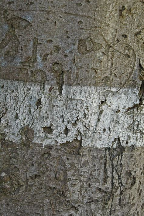 how to paint tree bark texture bark with paint texture by blokkstox on deviantart