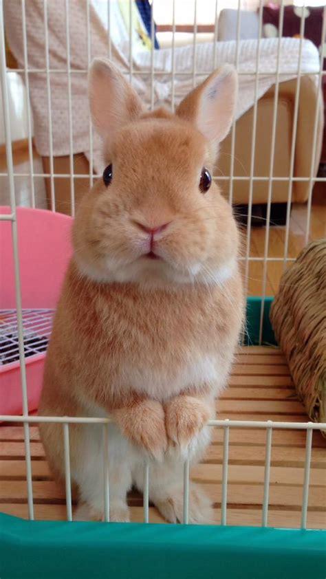 Kotak Bulat Segitiga bulat kotak segitiga puni si kelinci imut bisa berubah
