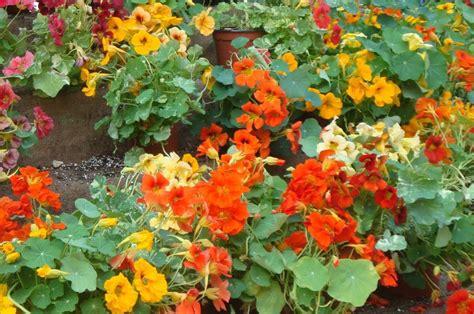 fiori nord esposizione a nord quali piante usare casafacile