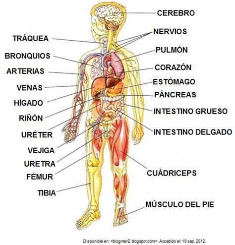 imagenes virtuales del cuerpo humano resultado de imagen para el cuerpo humano y sus partes