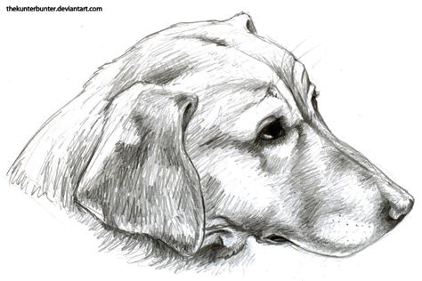 how to draw a golden retriever how to draw a golden retriever for step 7 brown hairs