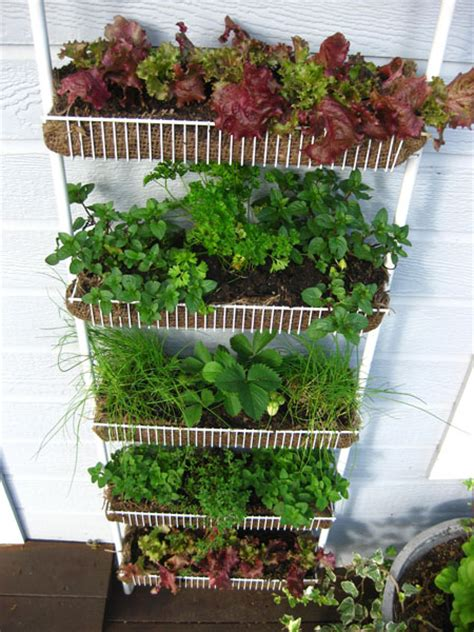 Vertical Garden Rack Vertical Vegetable Garden Diys And How Tos