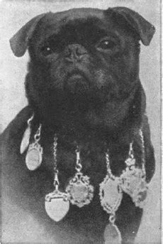 how much does a pug cost in india bulldog history history of the bulldog