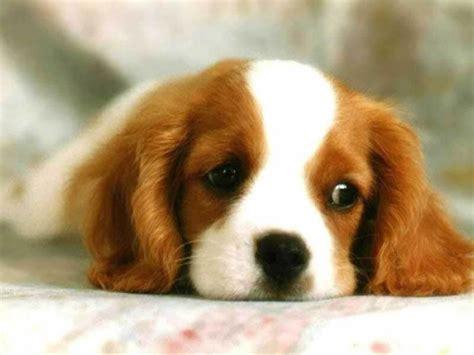 chicos para coger dogs puppy