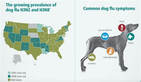 puppy flu dr marikay cbell offers facts about flu in pet expert steve dale s