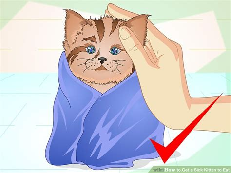 how to get a sick to eat how to get a sick cat to eat cats