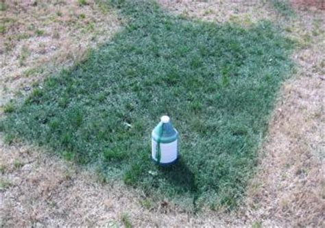 spray paint your lawn green spray green grass paint turf dye turns brown dormant lawn
