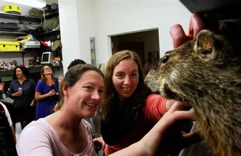 groundhog day nancy marmot researchers raise a toast for groundhog day latimes