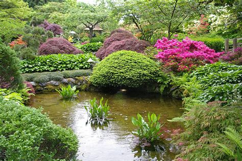 image gallery japanese plants and shrubs
