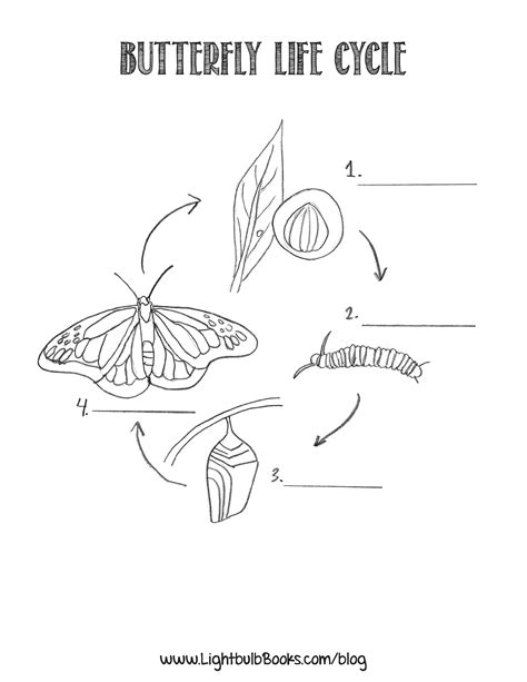 butterfly metamorphosis coloring pages free coloring pages of butterfly pupa