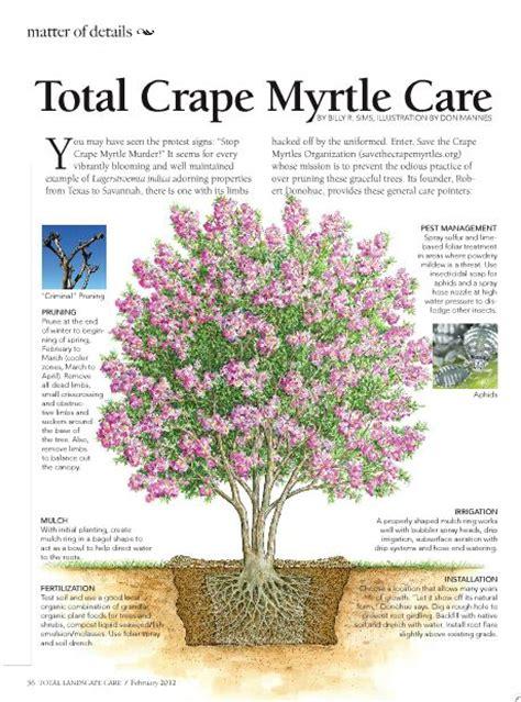Landscape Supply Myrtle 17 Best Images About Crape Myrtle On More