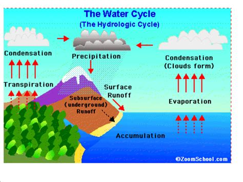 diagram of the water cycle fifth grade wiki water cycle