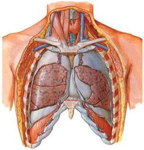 dolori gabbia toracica apparato respiratorio anatomia