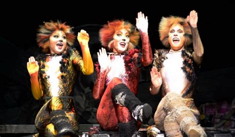 cats musical images review cats london palladium a younger theatrea
