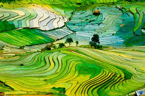 Lifestyle Network Home Design by Terrace Farming Turns Hilly Landscapes Into Beautiful Art