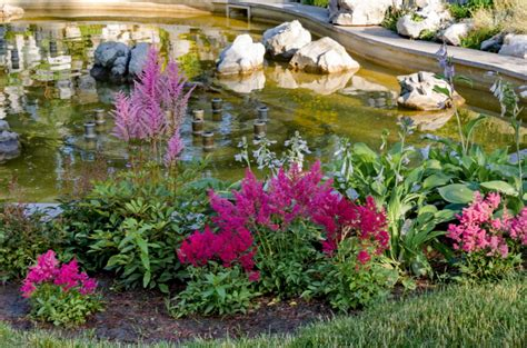 landscaping flowers to accent your rockery b d rockeries