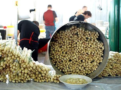 come si cucinano gli asparagi bianchi dalla festa dell asparago bianco di zambana consigli per